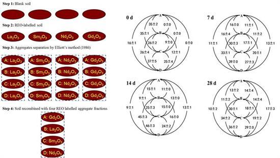 稀土元素标记团聚体的方法(左)和周转路线图(右)