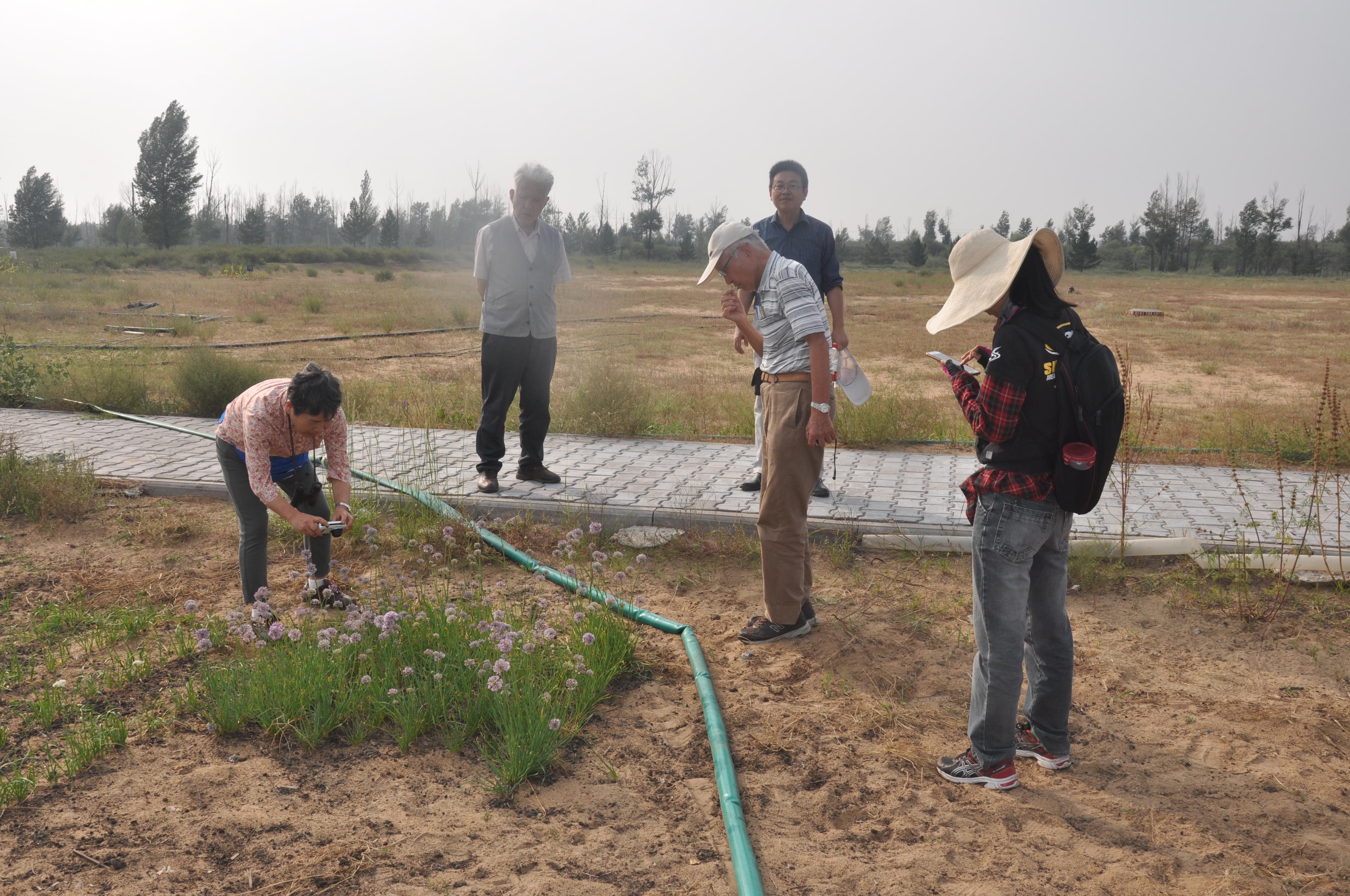 考察沙地资源植物试验示范样地