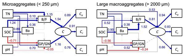红壤根际线虫对微生物的捕食作用在大团聚体中对碳库储存和周转的影响与微团聚体不同