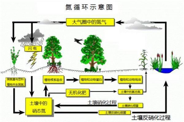 氮循环示意图