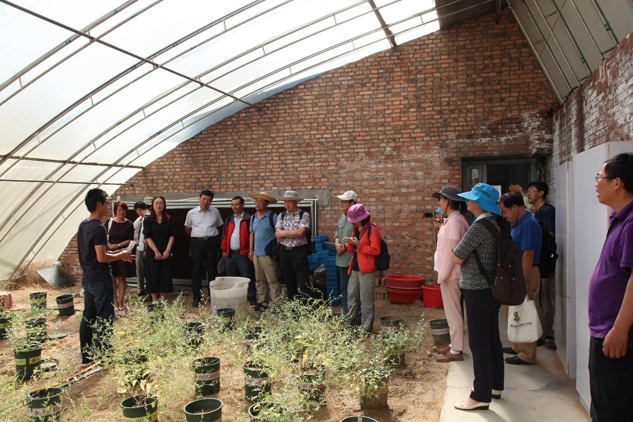 考察植物异型种子母体效应温室实验