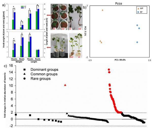 花生根际微生物组成及其对花生生长发育的影响