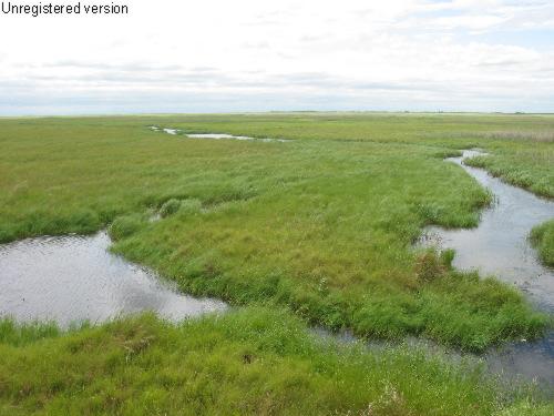 独特的湿地景观