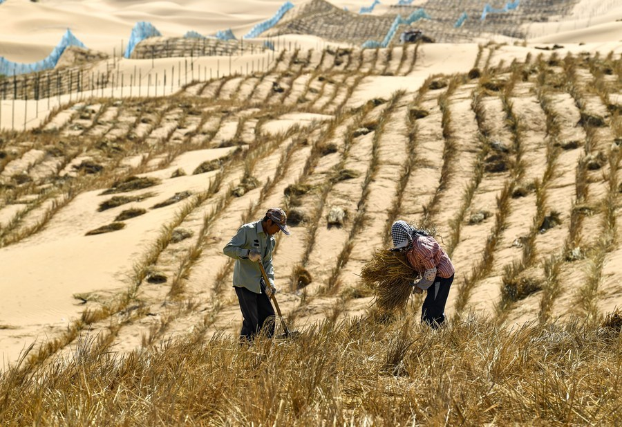 Reprint:Chinese experience in desert control helps green the world
