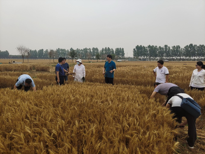农业资源研究中心麦收期间慰问栾城站一线人员并开展安全检查