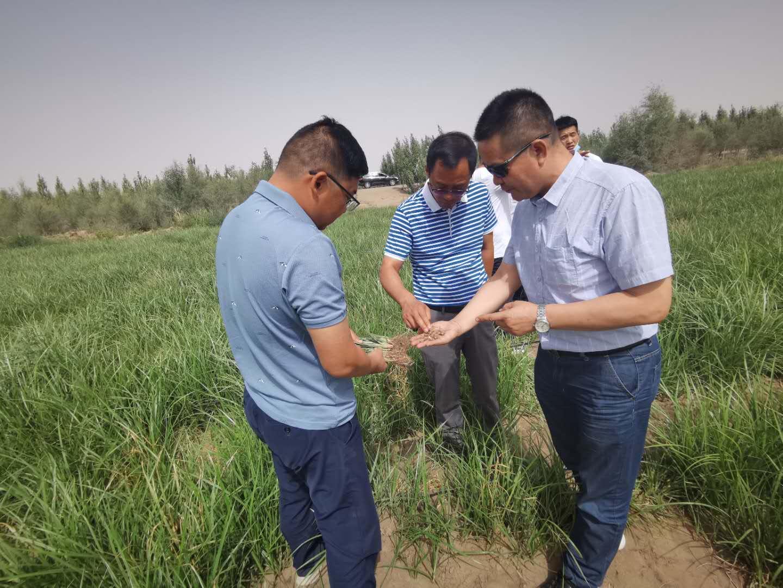 策勒沙漠研究站团队赴新疆生产建设兵团第三师54团调研座谈