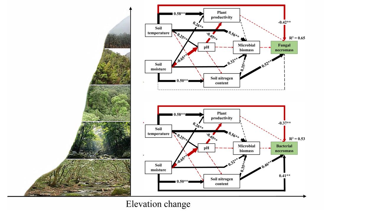 气候和土壤调控微生物残体在亚热带森林中的海拔分布格局