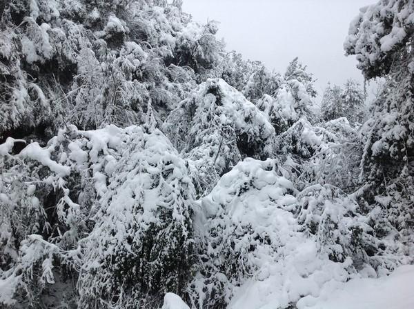 极端降雪干扰后亚热带森林反照率的改变主导了其辐射强迫的变化